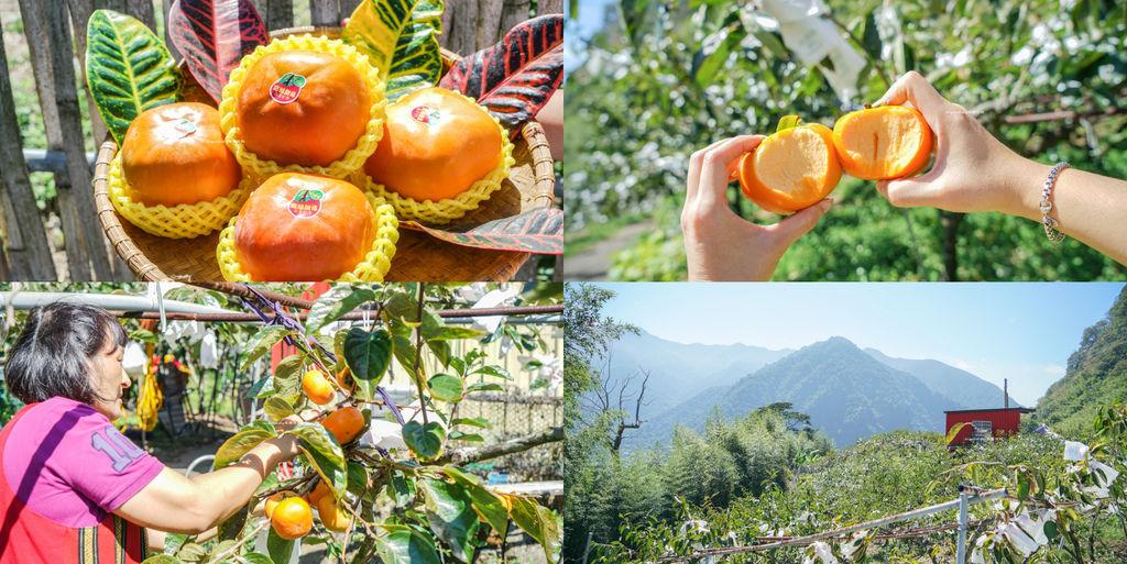 苗栗甜柿脆度最高、高海拔甜柿、苗栗農特產推薦、『日本甜柿』品質 @梅格(Angelababy)享樂日記